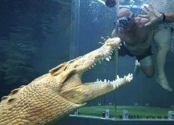 Экстремальное погружение с крокодилами