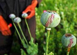Кабул своим опиумным изобилием совратил целое поколение россиян