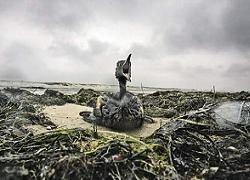 Керченский пролив до сих пор не очищен от нефтепродуктов
