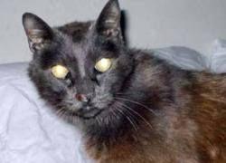Пропавший 13 лет назад кот вернулся к хозяевам