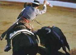 Испанских матадоров обвиняют в заказном убийстве лошадей