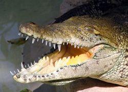 Топ-10 видов животных на грани вымирания