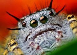 Чудеса маскировки пауков