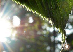 Солнечные зайчики опасны для зрения