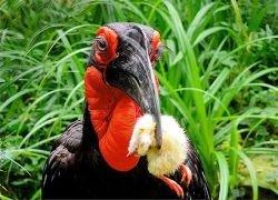 """Птицы могут выучить \""""язык\"""" своих соседей"""