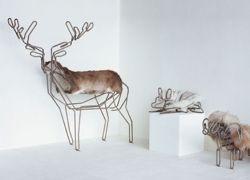 Guus Van Leeuwen и его домашние животные