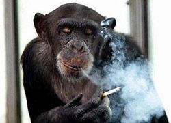 Табачный закон в России - вне закона