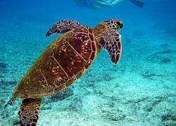 Обнаружено недостающее звено в эволюции черепах