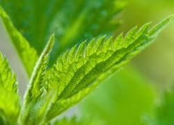 От каких болезней излечат травы?