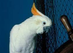 Потерянный попугай позвонил хозяину по телефону