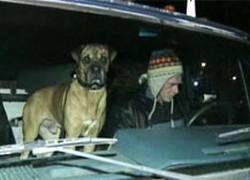 Пес в автомобиле въехал в витрину американского кафе