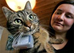 """В Великобритании популярны фотографии, \""""сделанные\"""" кошками"""