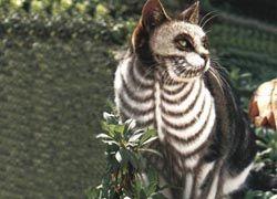 Шведские ученые составляют трехмерные анатомические атласы животных