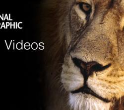 National Geographic будет выпускать видеоигры