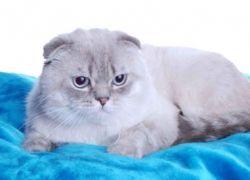 Итальянский суд приговорил хозяина кота к трём месяцам тюрьмы