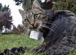 По улицам Европы гуляют кошки-фотографы