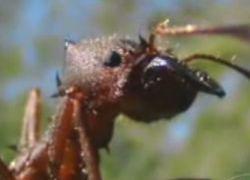 Подземный город муравьев