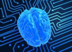 Склонность к новизне ученые объяснили особенностями строения мозга