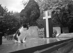 Как похоронить питомца по-человечески?