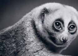Неожиданные портреты животных