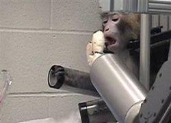 Ученые создали обезьяну-киборга