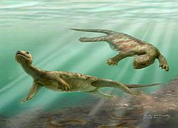 Почему у черепах появился панцирь