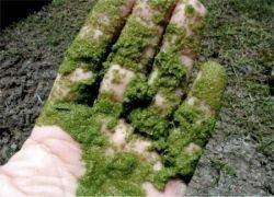 В Перу можно купить солнцезащитную одежду из водорослей