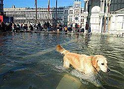 В Венеции началось сильнейшее за 30 лет наводнение