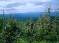 Леса могут исчезнуть независимо от объема парниковых газов