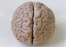 Найден источник альтернативной энергии для вашего мозга