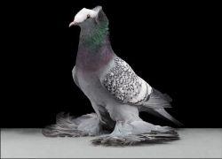 Tobias Kresse устроил фотосессию для голубей