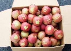 Японские фанаты Apple вырастили яблоки с логотипом компании