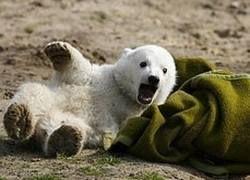 Финкризис выгоняет даже медведей из зоопарка
