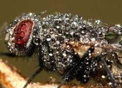 Обнаружен самый древний отпечаток доисторического насекомого