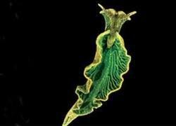 Ученые нашли гибрид растения с животным