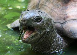 Самое старое существо на планете - черепаха
