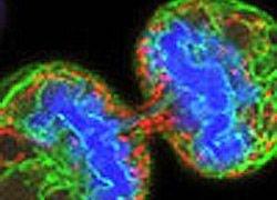 Открыто происхождение раковых заболеваний?