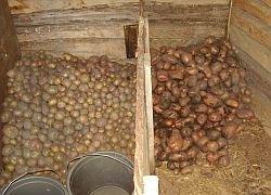 В ноябре активнее других продуктов дорожал картофель