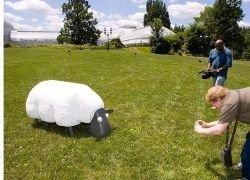 Робот-овца, подстригающий газон