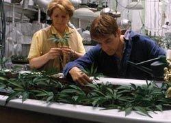 В Мичигане больным разрешили курить марихуану