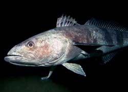 Рыбы помогут ученым изучить морское дно