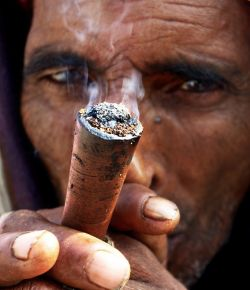 Древние люди выращивали коноплю не только для того, чтобы вить верёвочки