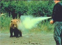 Драка рыбака с медведем победила в рейтинге самых забавных роликов