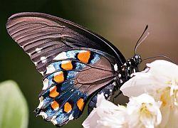 Хай-тек от бабочек