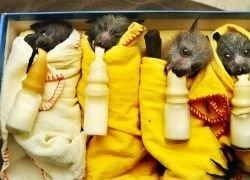 Как в Австралии заботятся о редких животных?