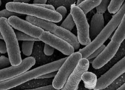 """Ученые создали \""""бактериальное спиртовое биотопливо\"""""""