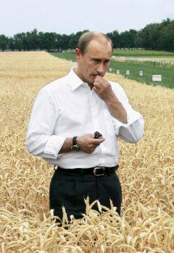 Зерно гниет, булки дорожают