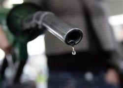В США научились делать бензин из кишечной палочки