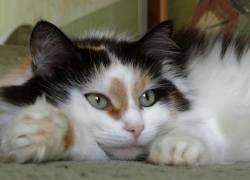 Ветеринары из Бостона пришили кошке лицо: шкуру содрал вентилятор