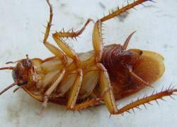 За что мы не любим тараканов?